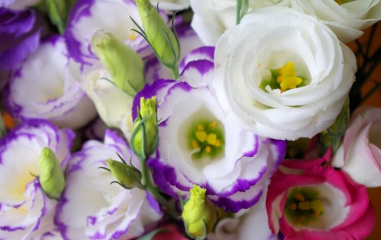 フォトウェディングのブーケは決まった?種類・色・お花・衣装から選ぶ22