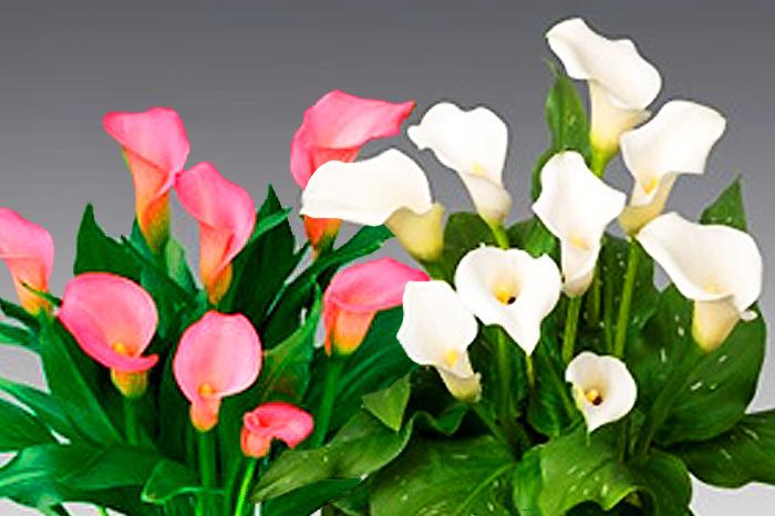 フォトウェディングのブーケは決まった?種類・色・お花・衣装から選ぶ17