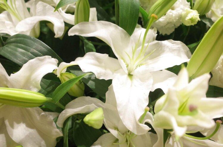 遺影写真を飾る花のおすすめは?種類から色まで紹介7