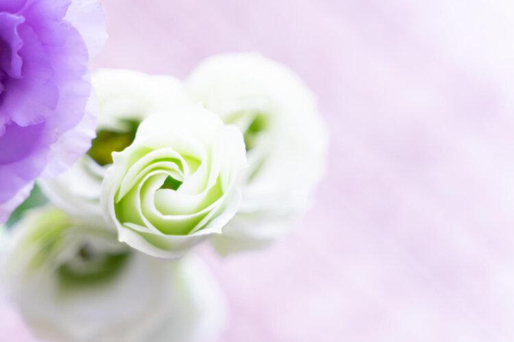 遺影写真を飾る花のおすすめは?種類から色まで紹介4
