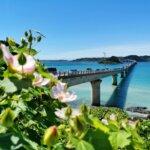 沖縄県で成人式の前撮り・後撮りにおすすめの写真館10選